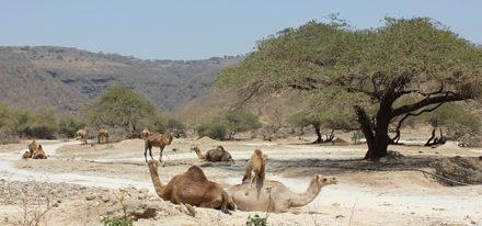 Wadi Darbat Oman Salalah Dhofar Rundreisen Studienreisen