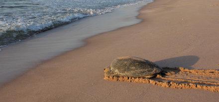 Hotels Oman Schildkrötenstrand Ras Al Jinz